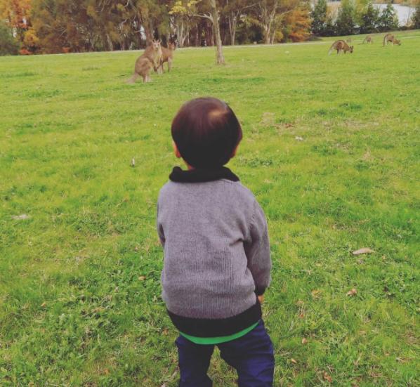 ngangon kanguru